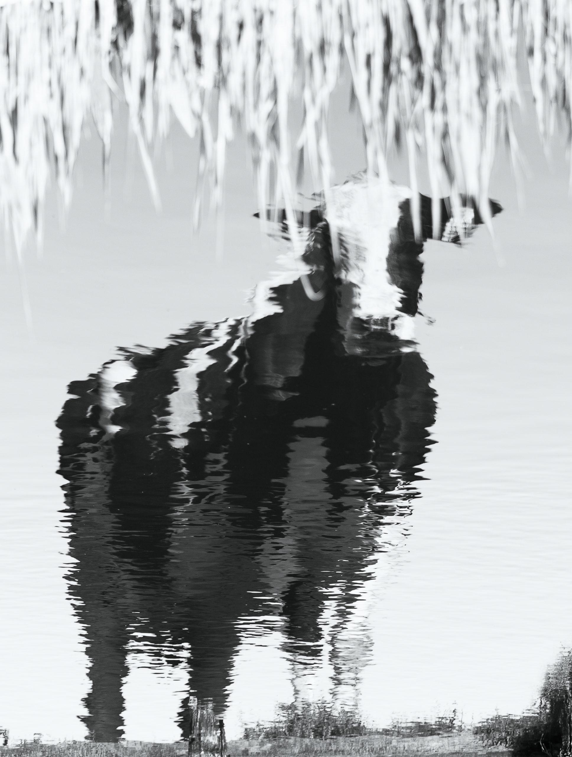 fotograaf waterland